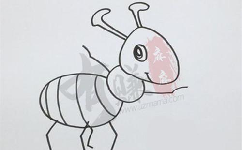 分享灭蚂蚁最有效的土方法